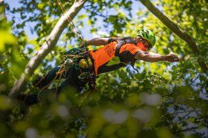 arborist job salary