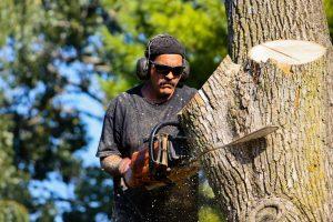 tree removal near me